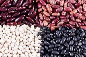 Selling beans wholesale
